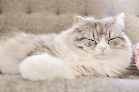 自分に合う睡眠時間を確保すること