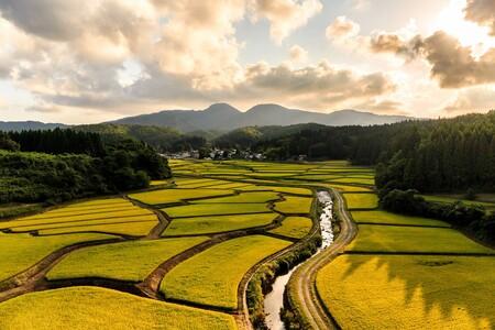 天保の改革農村